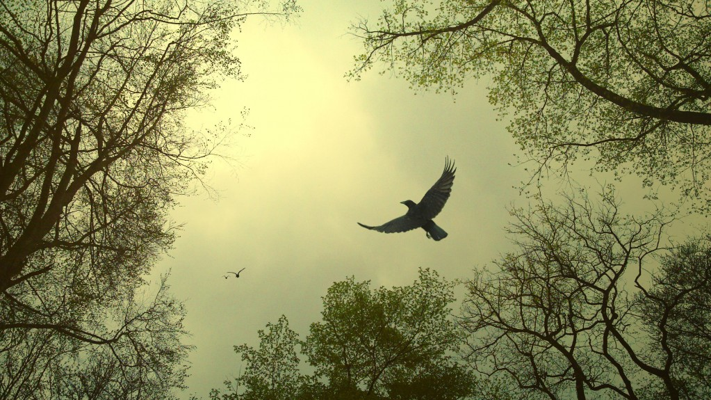 Crow Divination Pt 2 of 3