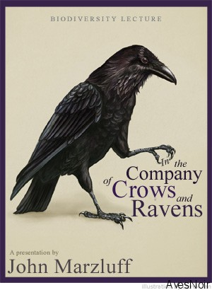 John Marzluff: Crows & Ravens Lecture Series